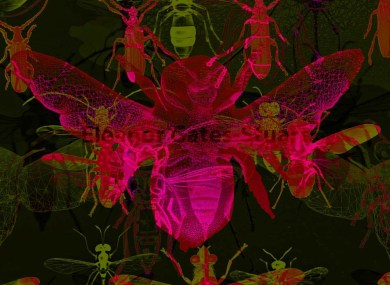 '20x20' Insect Collection by Eleanor Gates-Stuart