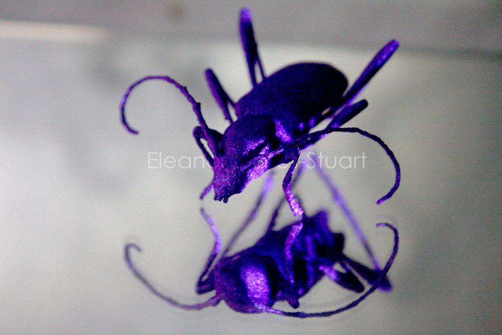 Longhorn Beetle (3D Titanium Printed Insect) by Eleanor Gates-Stuart