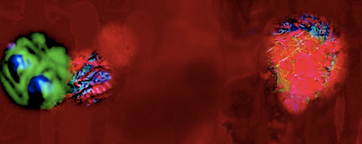 Video Image: 'Virus' by Eleanor Gates-Stuar