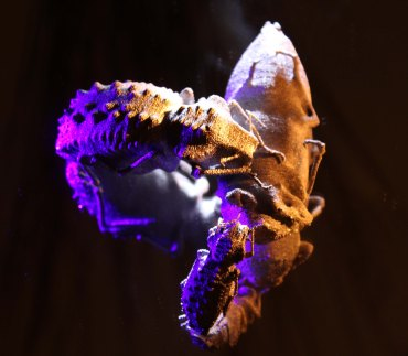 3D Printed Titanium Insects