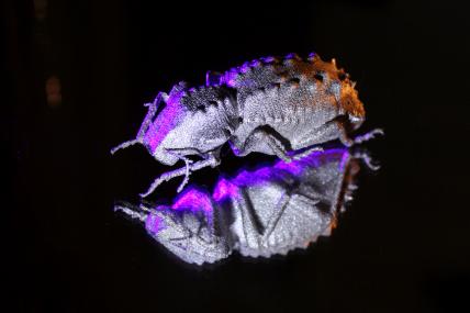 3D Printed Titanium Beetle