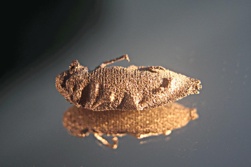 3D Printed Titanium Beetle - Palm Beetle