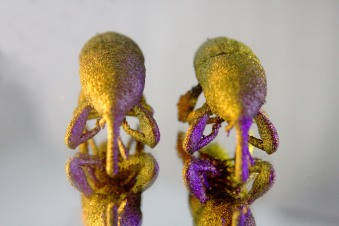 3D Printed Titanium Beetles - Wheat Weevil