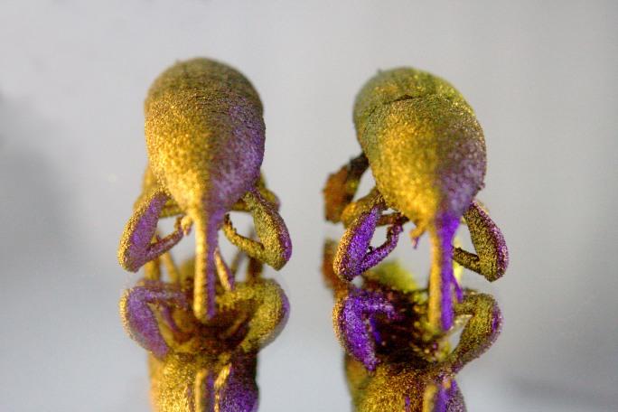 3D Printed Titanium Beetles - Wheat Weevil