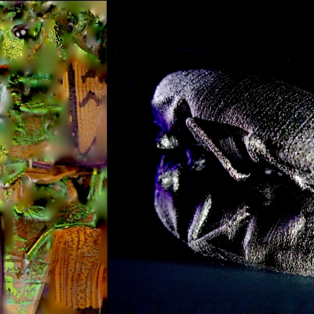3D Titanium Palm Beetle with Texture Mapping