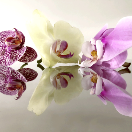Photographing Orchids: Professor Eleanor Gates-Stuart