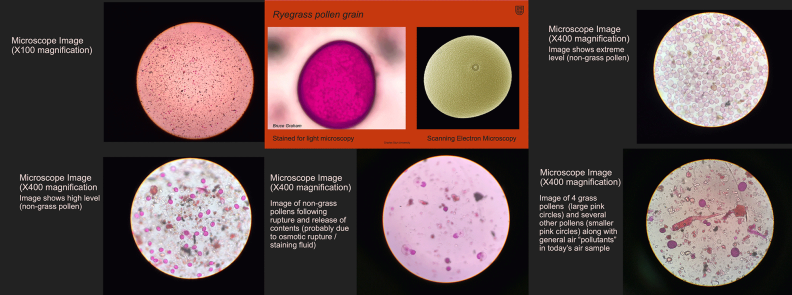 Microscope Images: Dr Bruce Graham